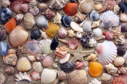 Crystal Coast Shells